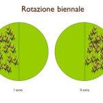 agricoltura-rotazione-biennale