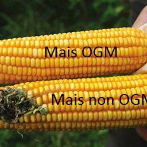 OGM: Cosa sono e a cosa servono gli O.G.M.?