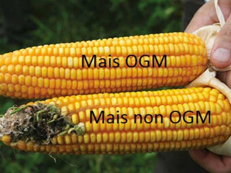 ogm-contro-non-ogm